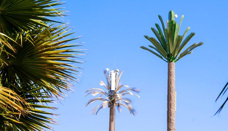 Фотография Базовой Станции на пальмах в Египте